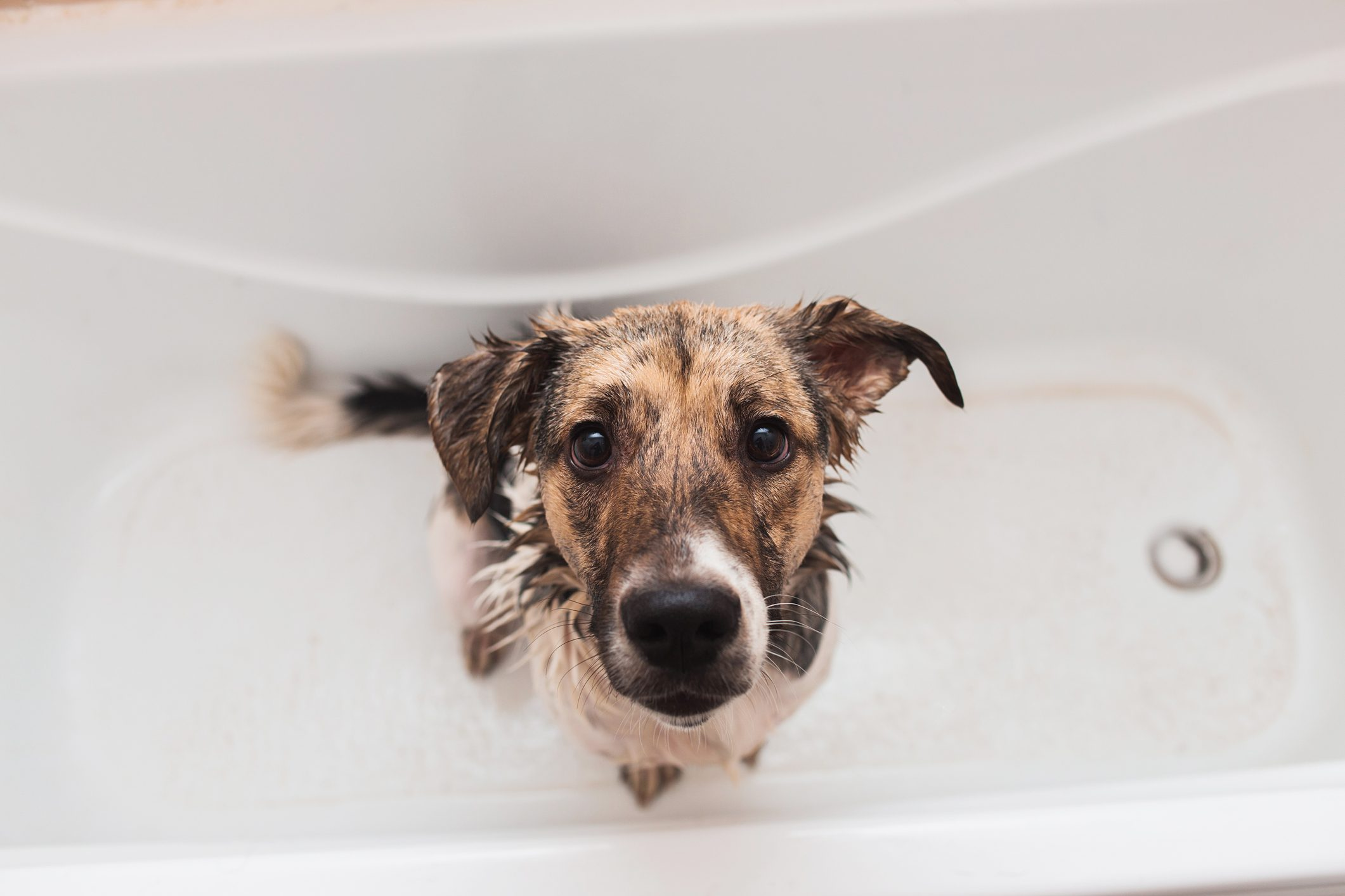 dog in bath tub looking up at camera