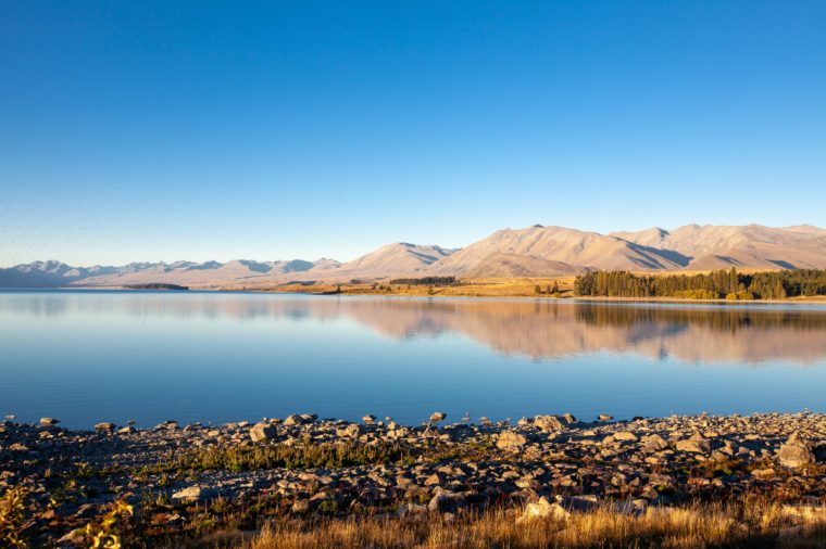 Late afternoon view of Lake Tekapo shoreline just behind the Church of the Good Shepherd. Many sandflies / mosquitoes are visible - an iconic pest around this area.