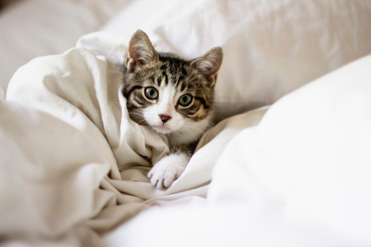 pet cat in bed