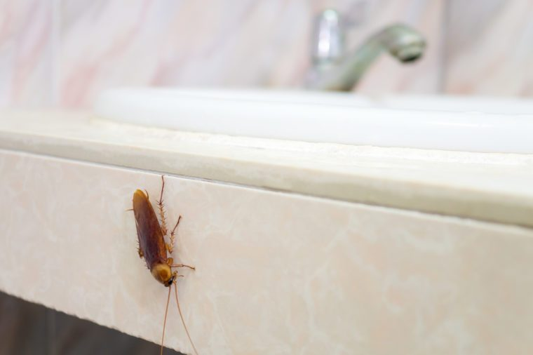 cockroach in bathroom