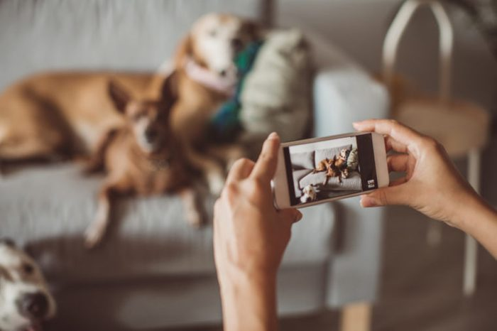 taking a picture of dogs on couch
