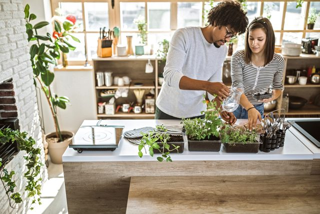 couple tending to their indoor plants and herbs