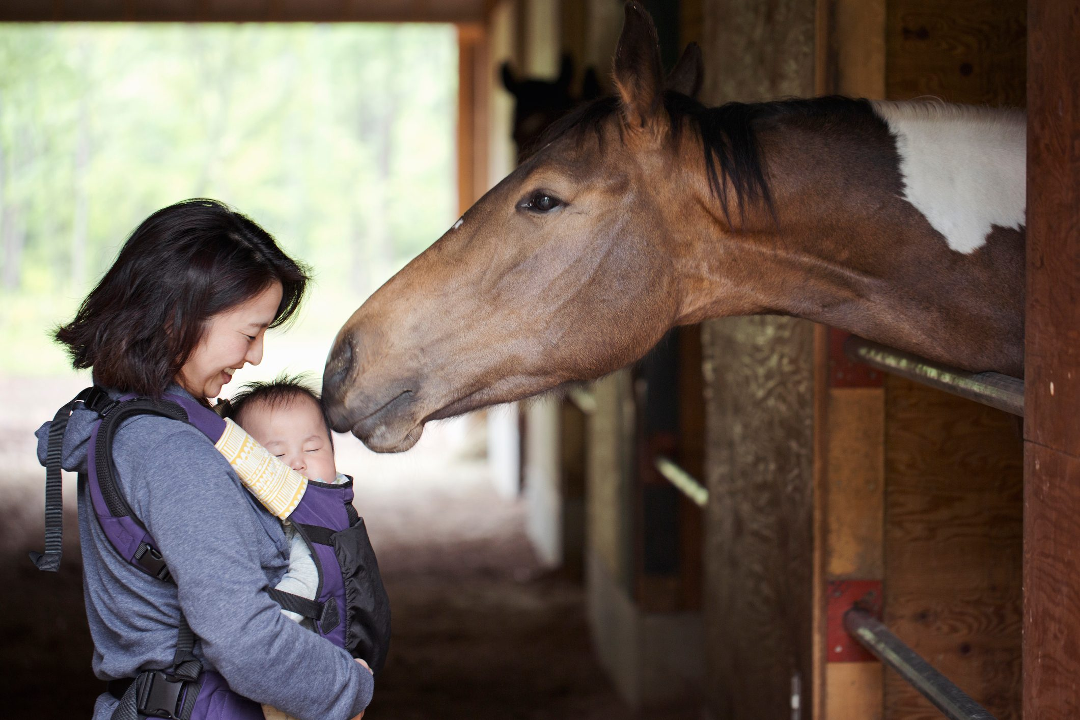 horse and human bond concept