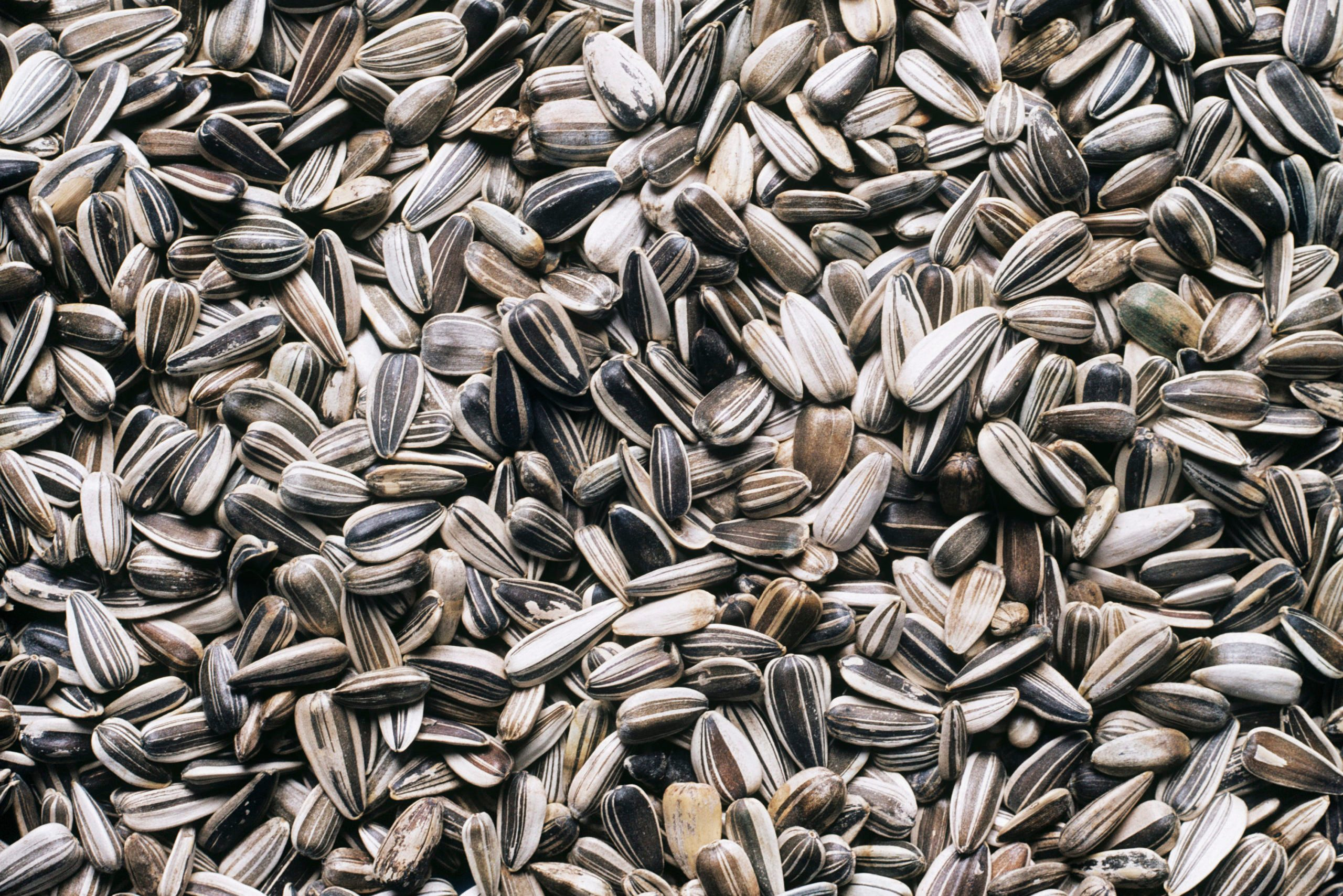 Sunflower seeds, close-up