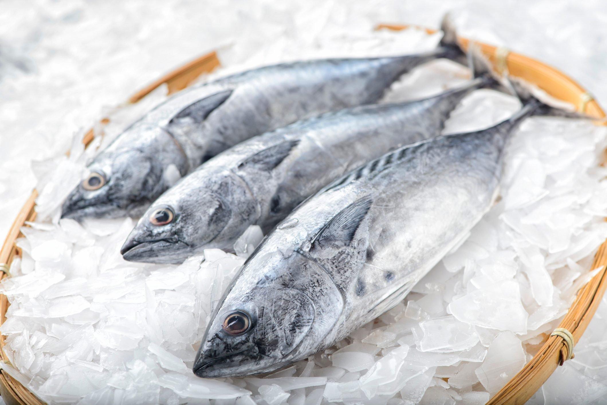 Three bonito tuna fish