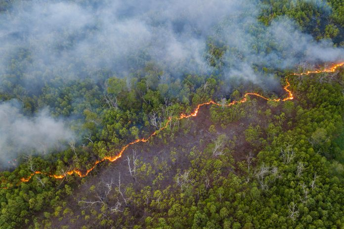 High Angle View Of Forest Fire