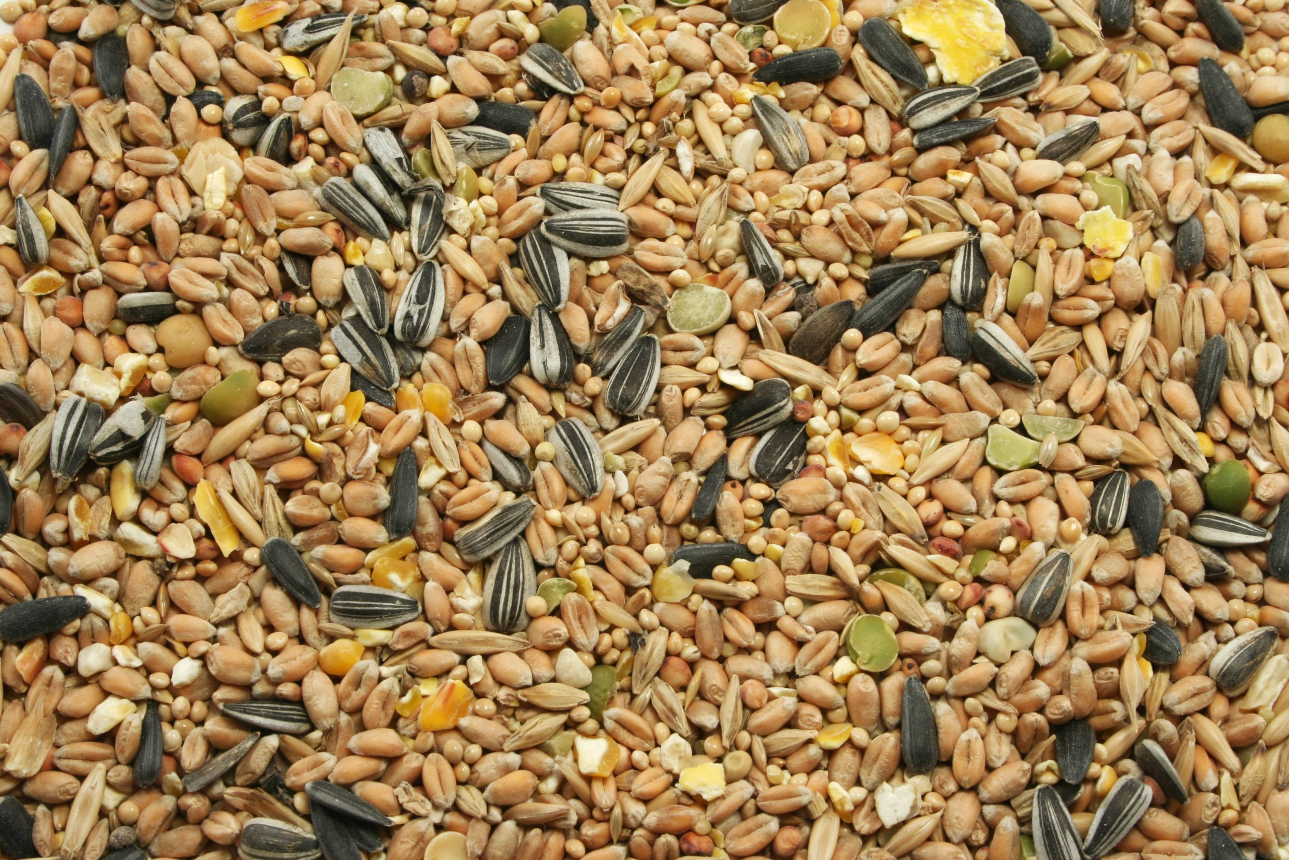 Why Nutritionists Love Seeds
