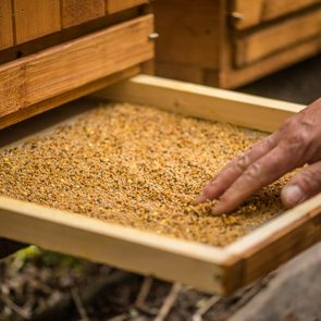 detail of bee keeper taking out pollen propolis tray out of bee hive