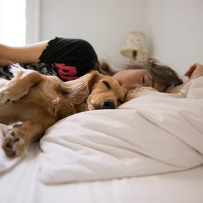 Long haired dachshund sleeping in bed with his human