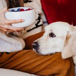 Can Dogs Eat Blueberries? 10 Things Veterinarians Want You to Know
