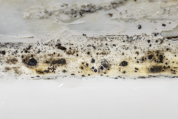 close up of Mold In a Bathroom