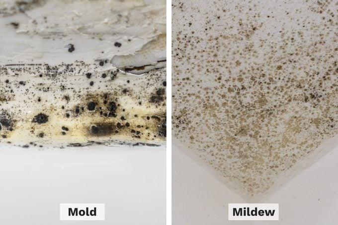 Mold Vs Mildew Side By Side